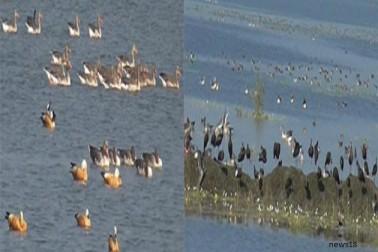 શિયાળાની શરૂવાત સાથે જ વઢવાણ તળાવમા પક્ષીઓનું આગમન